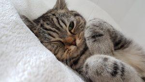 cat-2778603_1920